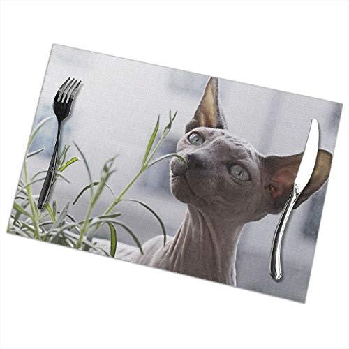 Dingl Sphynx Kat Voor Plant Placemat Wasbaar Anti-lip Voor Keuken Diner Tafelmat, Makkelijk Te Reinig Plaats Mat 12x18 Inch Set Van 6