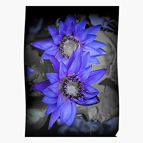 Lancave9s Garden Selective Water Lily Lilies Oriental Purple Color The most impressive and stylish indoor decoration poster available trending now