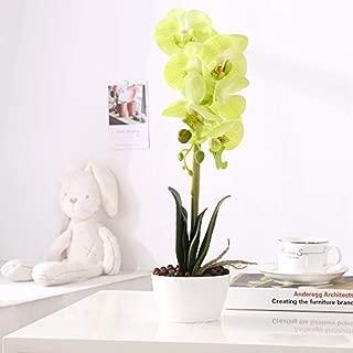 IMIEE Phaleanopsis Arrangement with Vase Decorative Artificial Orchid Flower Bonsai (Green)