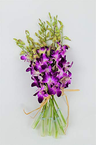 Fresh Vibrant Purple Dendrobium Sonia/Galaxy/Bombay Cut Orchids Bunch From Nursery (Fresh Cut)