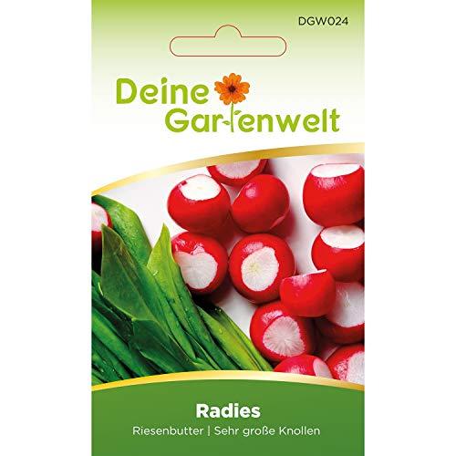 Radieschen Riesenbutter | Samen für Radies | Radiessamen | Radieschensamen