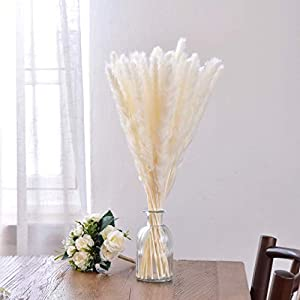 KODIKAS Pampas Grass – 30 Stems of All Natural Dried Pampas Grass to Bring A Little Piece of Cozy Nature Home – Pampas Grass Decor in White and Brown Perfect for Homes, Weddings, Gifts and More