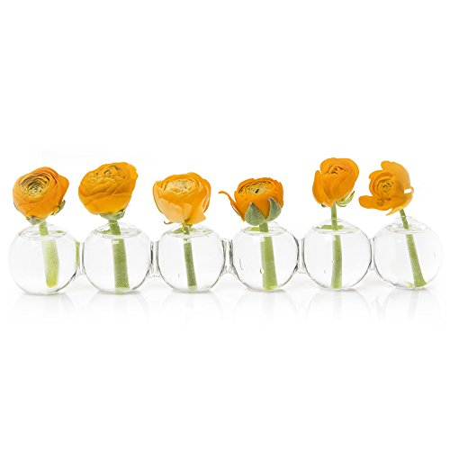 Chive – Caterpillar, Small Clear Glass Bud Vase for Short Flowers, Unique Low Sitting Flower Vase, Cute Floral Vase for Home Decor, Weddings, Floral Arrangements, Arranging, Set of 6 Round Balls
