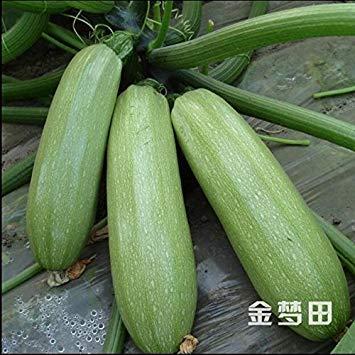 10pcs/lot moelle, les courges d'été, les graines de légumes Fruits faire annuler des semences Légumes Melon Les Saisons de courgette Seeds High Yield 2