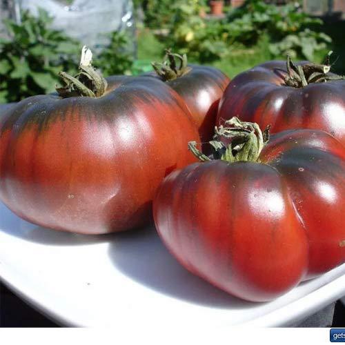 Tomate Black Krim/Noire de Crimee 25 x Samen aus Portugal 100% natürlich Aufzucht/absolute Rarität/Massenträger ideal für Salat und Snacks