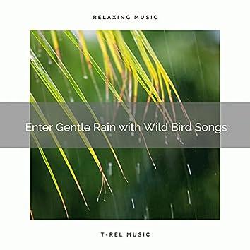 ! ! ! ! ! ! ! ! ! ! Enter Gentle Rain with Wild Bird Songs
