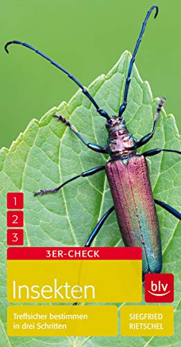 Insekten: Treffsicher bestimmen in drei Schritten