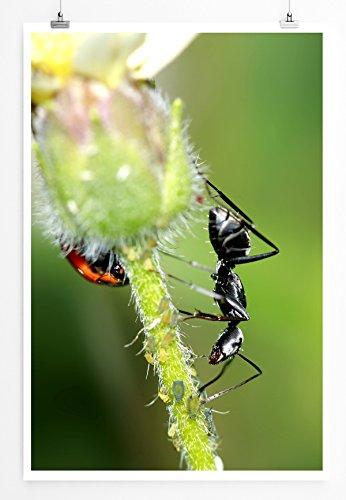 Eau Zone Home foto - dierenfoto's - zwarte kever en mier op een bloem fotodruk in haarscherpe kwaliteit LEINWANDBILD gespannt 90x60cm