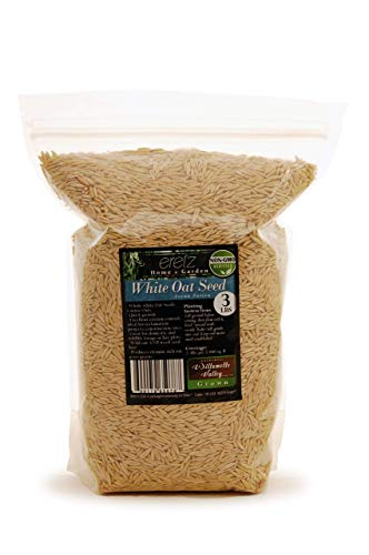 White Oat Seed by Eretz - Choose Size! Oregon Grown, State Certified Oat Grains- No Fillers, No Coatings, No Weed Seeds (3lb)