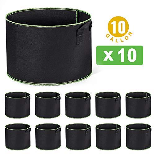 10 gallon pot - 6