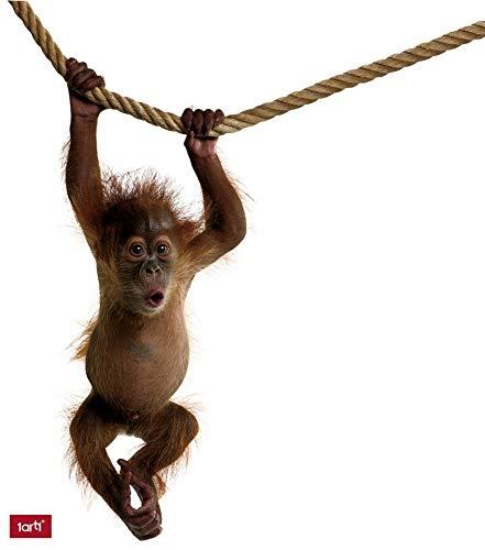 1art1 Affen - Orang Utan Baby Für Wand Und Tür Wand-Tattoo | Deko Wandaufkleber für Wohnzimmer Kinderzimmer Küche Bad Flur | Wandsticker für Tür Wand Möbel/Schrank 115 x 50 cm