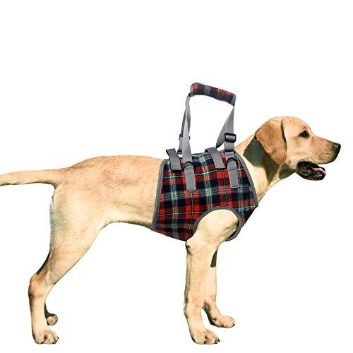 Kzobyd -   Hundegeschirr Vorne