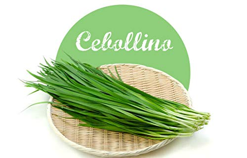Semillas de Cebollino Allium Schoenoprasum 200 Semillas de Planta Culinaria