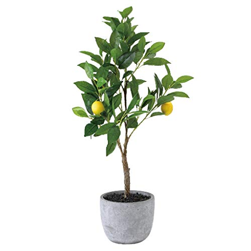 Time Concept Imitation Lemon Tree in Cement Pot - Artificial Plant, Indoor & Outdoor Display, Home & Garden Decor