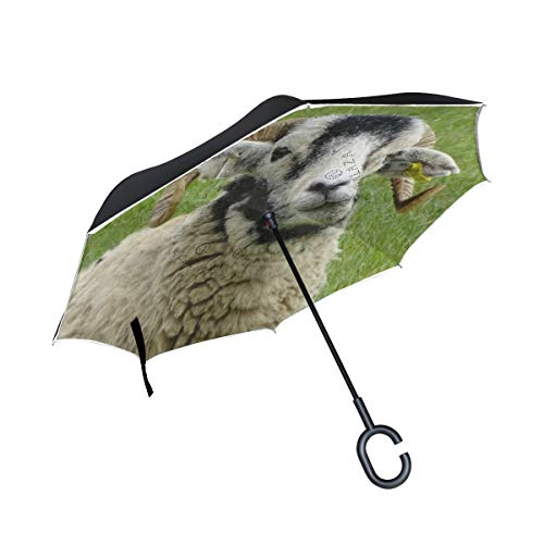 Find Cheap PNGLLD Lamb Sheep Animal Inverted Umbrella Double Layer Reverse Folding Umbrella with C-S...