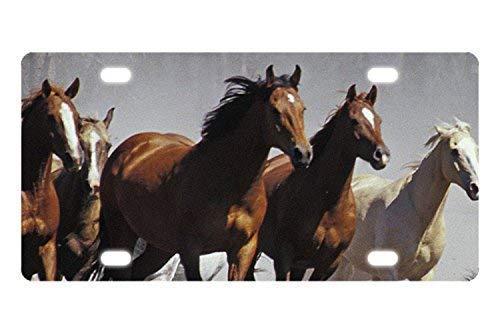 Dant454ty Wild Running Paarden License Plaat Frame Cover Metaal Humor Grappige Front License Plaat Decoratieve Vanity Tag voor Vrouwen