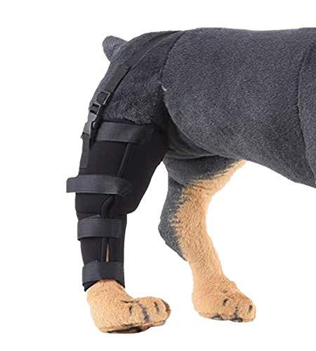 WXFEXIA Attelle de jambe arrière droite pour chien – Enveloppe canine pour protéger les plaies et le soutien à cause de l'arthrite pour éviter les blessures et les entorses ou la marche (1 pièce, L)