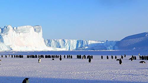 MAIYOUWENG Erwachsenenpuzzle Jigsaw Puzzle Holz Puzzle 1500 Teile A Group of Penguins On A Glacier Spielset Puzzle,Unterhaltsame Für Jung Und Alt Spaßige 87x57cm(34.3x22.4in)