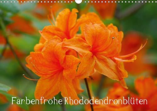 Farbenfrohe Rhododendronblüten (Wandkalender 2021 DIN A3 quer)