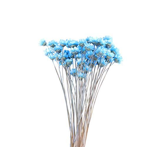 VOSAREA Flores secas Naturales pequeña Estrella brasileña Margarita Flores secas Decorativas Mini Margarita Flores de manzanilla Ramo para Boda arreglo Floral decoración del hogar 50 Piezas (Azul)