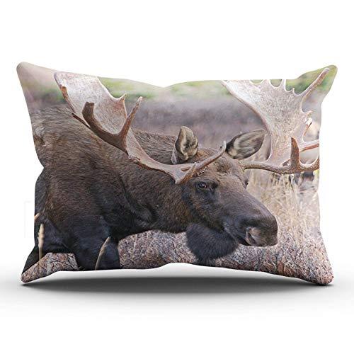 SUN DANCE Funda de almohada de color marrón, con diseño de alce grande de toro, 40,6 x 60,9 cm, estampado por un lado