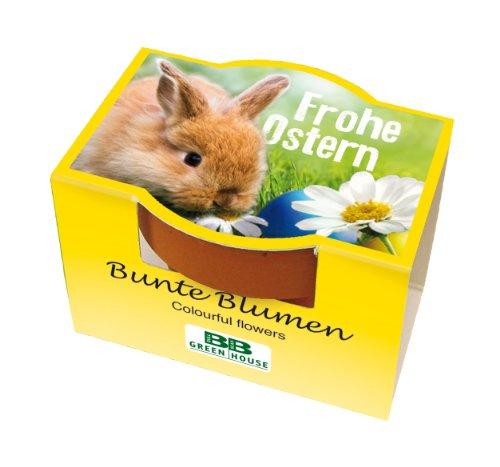 Minipflanzset Frohe Ostern