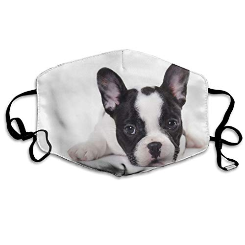 ETHAICO Fillter Cloth for Adult and Kids,French Bulldog Puppy On White Background,Reusable Windproof Cloth Half Face Double Protection