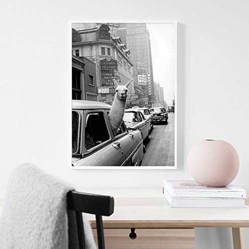 ThinkingPower Vintage Llama Poster Black White Alpaca in The Taxi Lienzo Art Print Pintura de Pared Imagen...