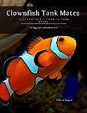 Clownfish Tank Mates : 10 Compatible Clownfish Tank Mates