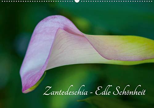 Zantedeschia - Edle Schönheit (Wandkalender 2021 DIN A2 quer)