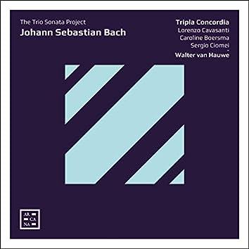Bach: The Trio Sonata Project