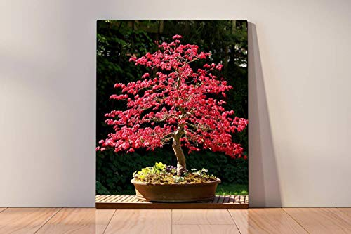 Paint by Numbers Kits Digital Oil Painting for Kid Adult Beginner Drawing Paintwork with Frame Home Office Gift Indoor Outdoor - Image of Large Japanese Maple Bonsai Tree with red Leaves