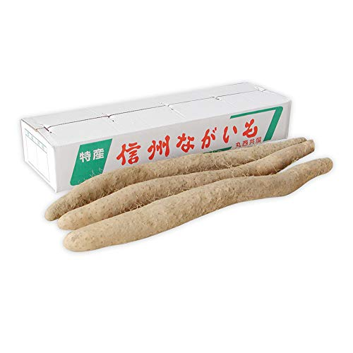 長芋 長いも 長野県産 5kg 国産 産地から採れたて ご自宅用 西村青果