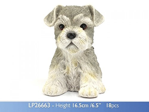 Leonardo Lesser & Pavey Puppy Love – Schnauzer