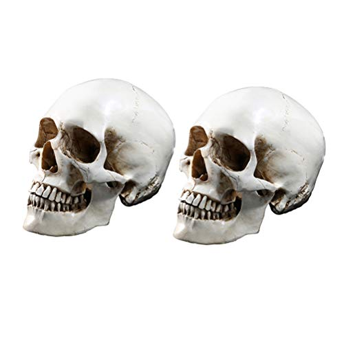 Amosfun 2 Unidades de Calavera médica anatómica Humana, tamaño Real, Calavera Humana, réplica de Resina, rastreo médico anatómico, Esqueleto de enseñanza, decoración de Halloween