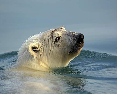 Polar Bear in The WaterpaintingbyNumbers Adult Digital Kit DIY Wooden Painting Oil Painting