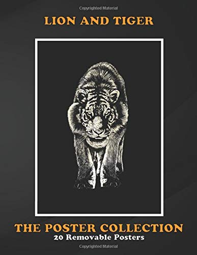 Poster Collection: Lion And Tiger Stare Animals