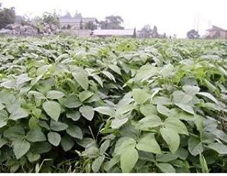種 だだちゃ豆 完全無農薬 無化学肥料 500g