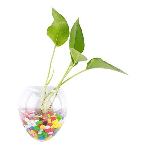 Vasi vetro idroponica contenitore da appendere a forma di cipolla Air terrario per vasi da fiori/fioriera di acqua, parete idroponica, 6