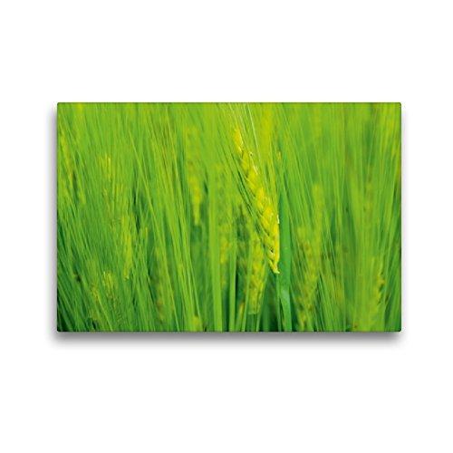 Premium Textil-Leinwand 45 x 30 cm Quer-Format Ähre | Wandbild, HD-Bild auf Keilrahmen, Fertigbild auf hochwertigem Vlies, Leinwanddruck von Susan Michel/CH