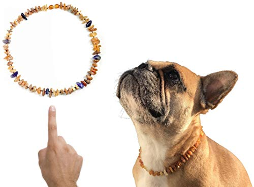 amberdog Bernsteinkette für Hunde Amethyst Art.Nr.00516-S Größe 30cm Bernstein Halsband Original