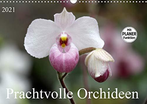 Prachtvolle Orchideen (Wandkalender 2021 DIN A3 quer)