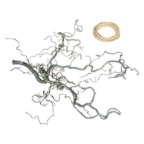 Korkenzieher-Sitzstange 60-80 cm x 40 cm + Sisalseil: Spielplatz Wellensittich | handverlesenes Naturholz | natürliches Vogelzubehör | Korkenzieherhasel-AST | Vogelkäfig Zubehör | Vogelspielplatz