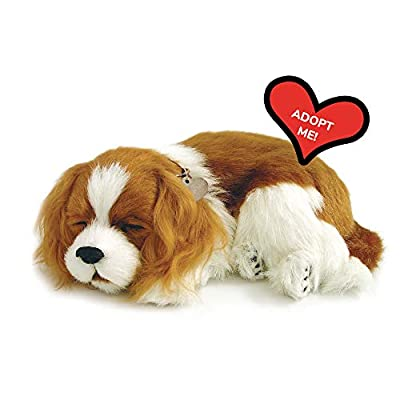 Original Petzzz Cavalier King Charles, Realistic, Lifelike Stuffed Interactive Pet Toy, Companion Pet Dog with 100% Handcrafted Synthetic Fur – Perfect Petzzz