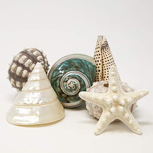 Fancy Sea Shell Set | 3 Unique Sea Shells - 2 Sputnik Sea Urchin and a Knobby Starfish Complete The Set | Beach House Decor