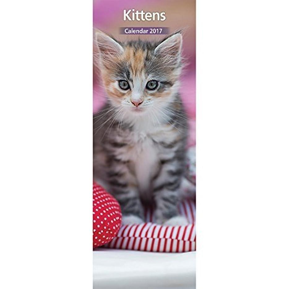 前飲み込むどちらかMagnet & Steel 2017 Kitten Calendar Slim Calendar [並行輸入品]