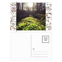 光の林業科学は自然の風景 公式ポストカードセットサンクスカード郵送側20個