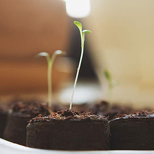 Kräuter Samen Set von OwnGrown, 12 Sorten Küchenkräuter als praktisches Kräutersamen Set, Gewürzsamen und Kräuterset für Küche und Balkon, 12er Box - 6