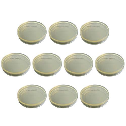 Baluue Placa de Petri - 10 Piezas de Envasado Al Vacío Desechable Determinar Equipos Placas de Agar R2a Placas de Petri para Laboratorio de Experimentos Científicos