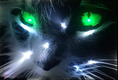 Samarkand-Lights LED-Bild mit Beleuchtung LED- Bilder Leinwandbild 65 x 45 cm Leuchtbild Katze Tiere Wandbild